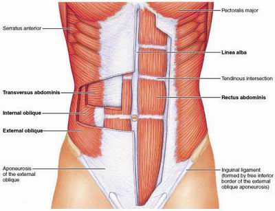 Build A Better Body Part Ii Myth Busting The Abs Motionworks