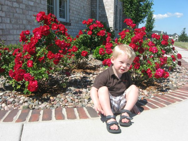 Aiden Murphy sitting by roses